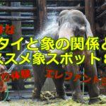 タイで象は不可欠な存在!?その関係とオススメ象スポット8選!